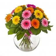 Beautiful Gerberas