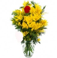 Mimosa flowers and single red rose