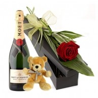 Moet, Teddy and Red Rose